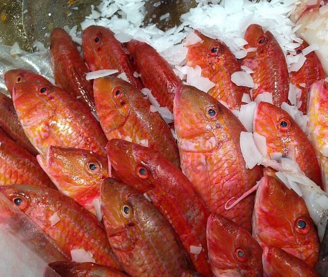Maquinas de hielo para pescadería