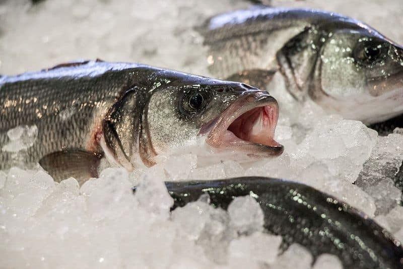 cubitos de hielo para pescado